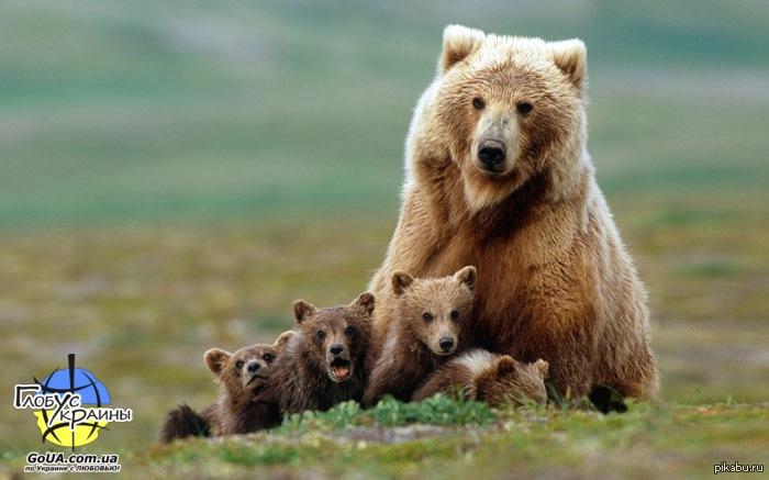 реабилитационный центр медведей экскурсия из запорожья украина