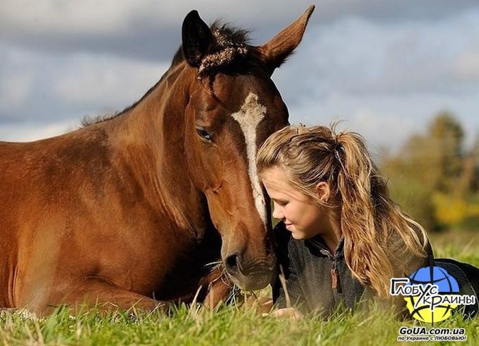 лошадки катание на лошадях запорожье