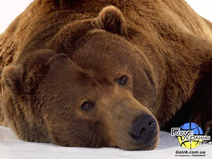 зоопарк пылышенко медведь